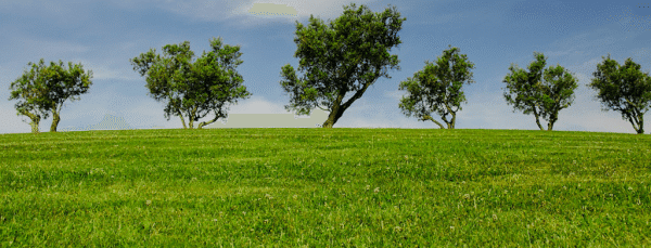How to Make Your Green Cleaning Business Stand Out